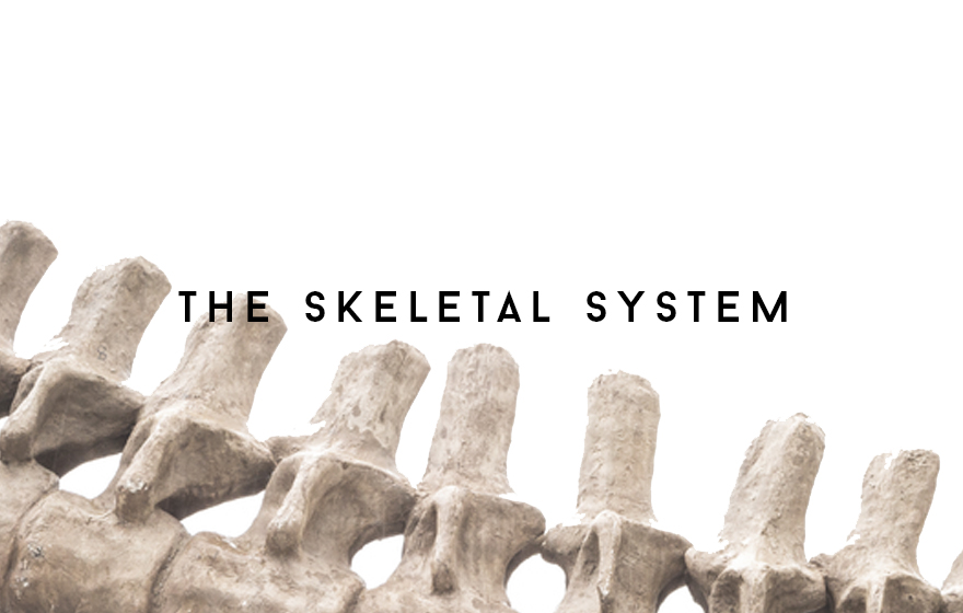 Course Image The Skeletal system