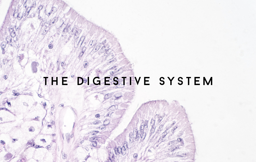 Course Image The Digestive system