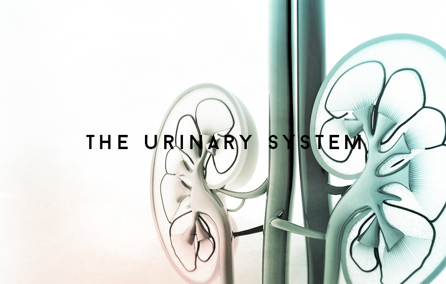 Course Image The Urinary system